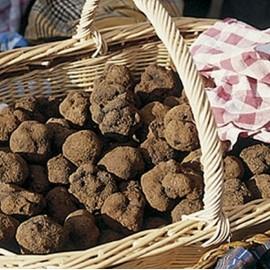 Sauce aux truffes 3% 100g